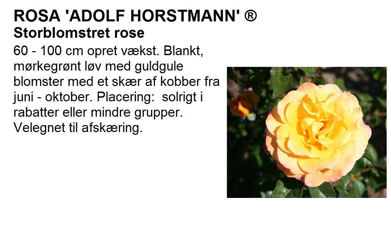 Adolf Horstmann