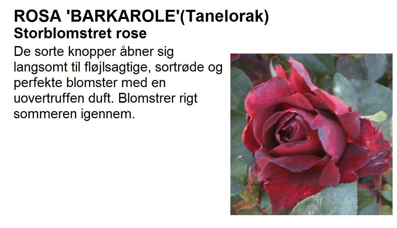 Barkarole