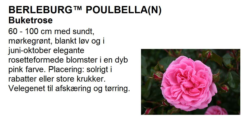 Berleburg