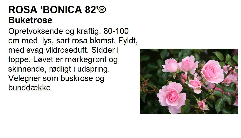 Bonica 82