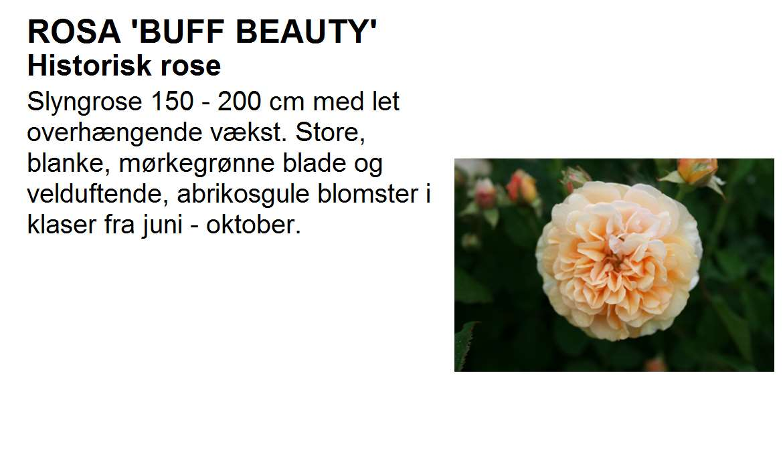 Buff Beauty