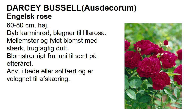 Darvey Bussell