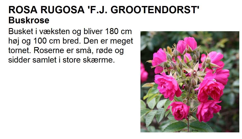 F J Grootendorst