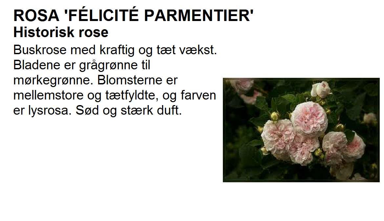 Felicite Parmentier