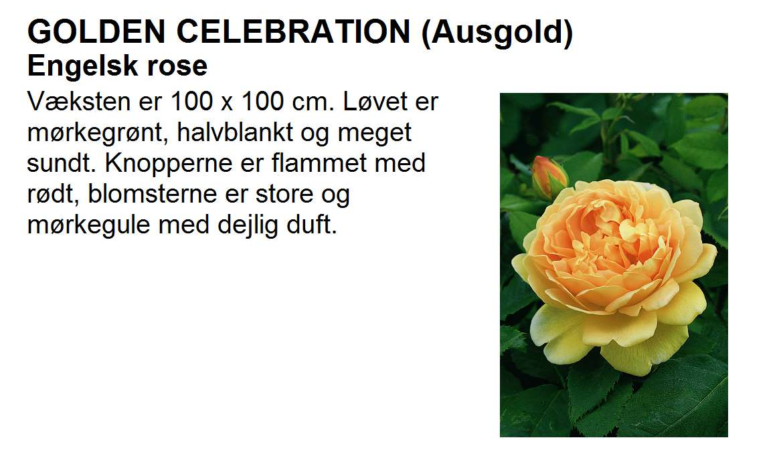 Golden Celebration