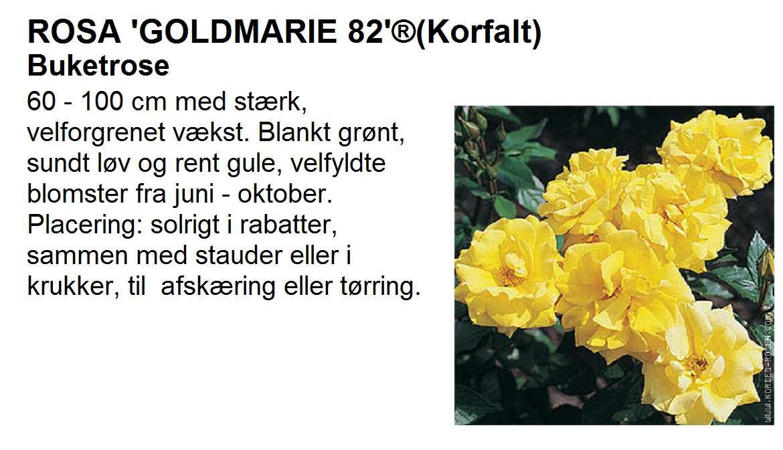 Goldmarie 82
