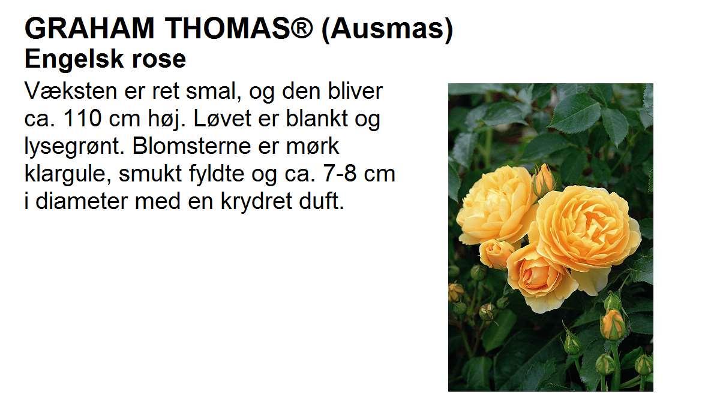 Graham Thomas