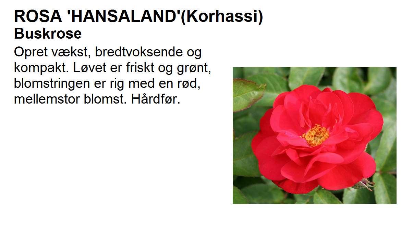 Hansaland