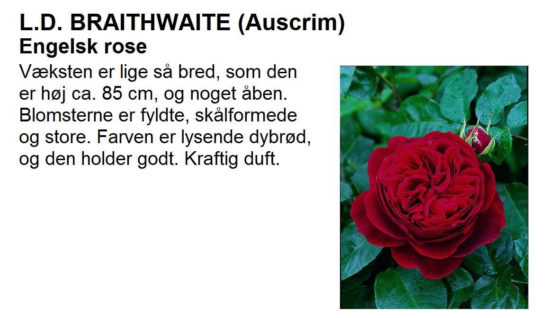 L D Braithwaite