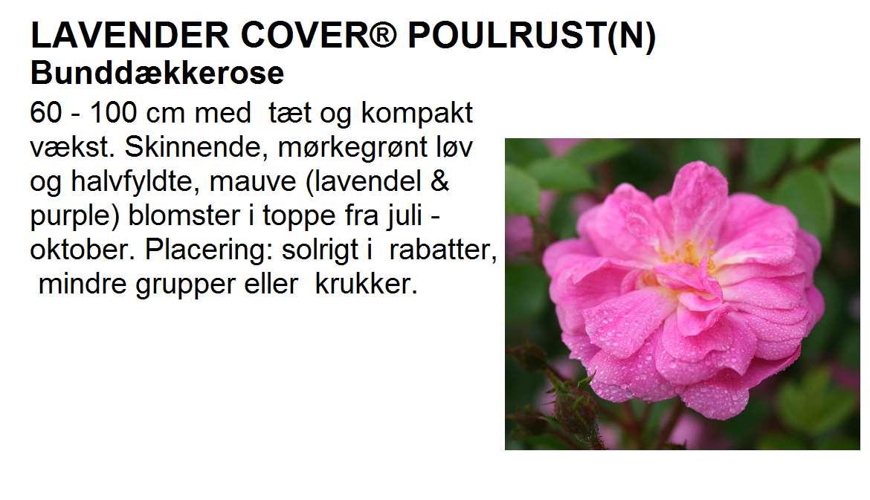 Lavender Cover