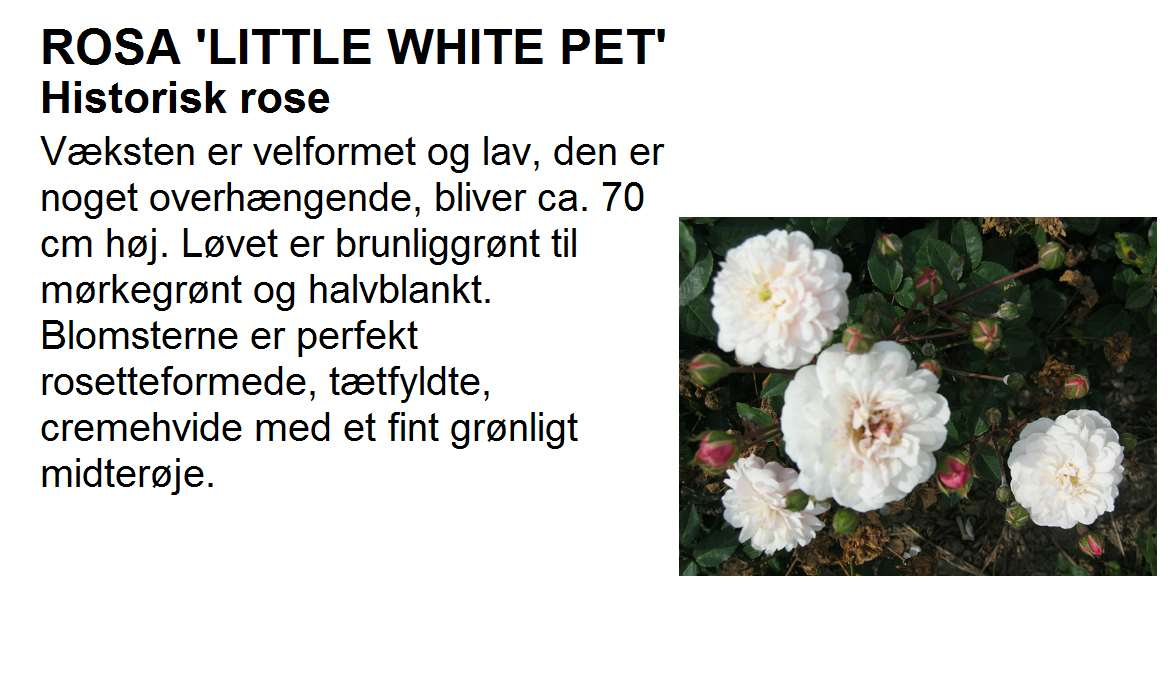 Little White Pet