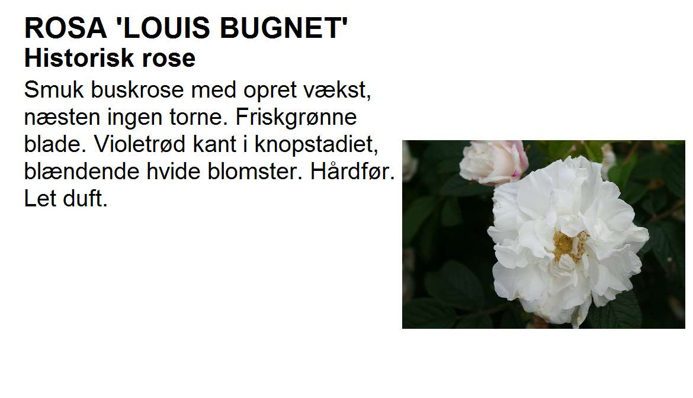 Louis Bugnet