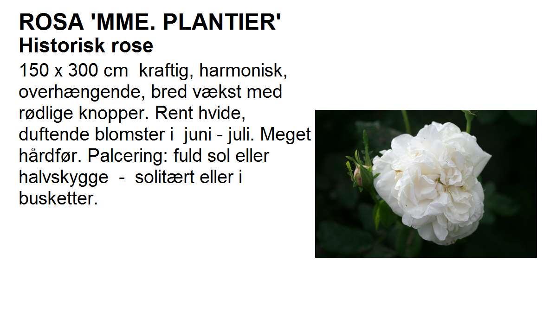 Madame Plantier