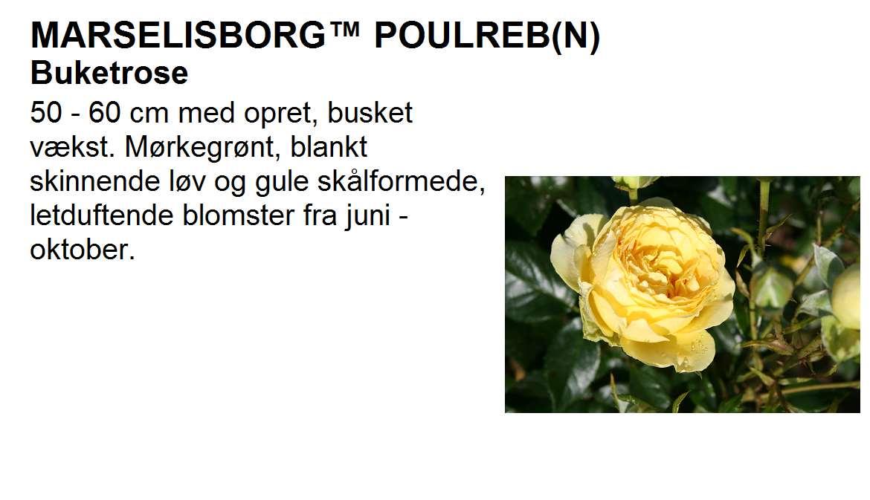 Marselisborg