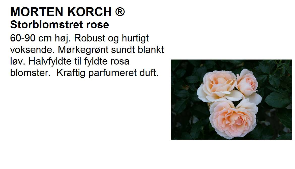 Morten Korch