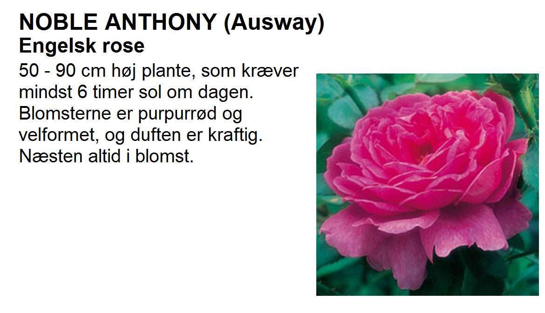 Noble Anthony