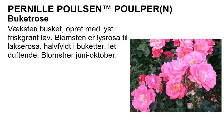 Pernille Poulsen