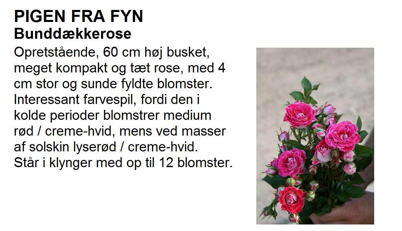 Pigen fra Fyn