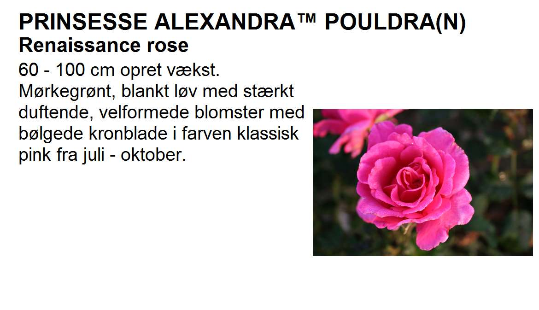 Prinsesse Alexandra