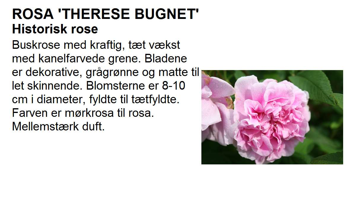 Therese Bugnet