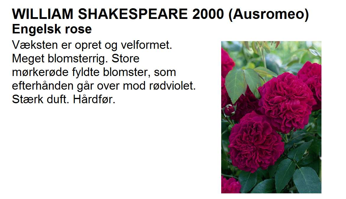 William Shakespeare 2000