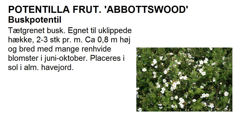 Potentilla Frut Abbottswood